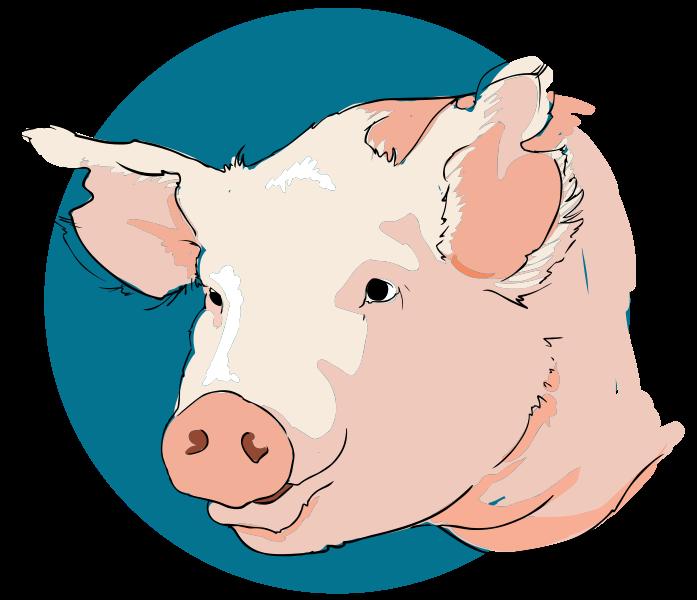 Pig Head Clipart Png.