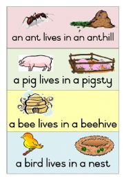 English teaching worksheets: Animal homes.