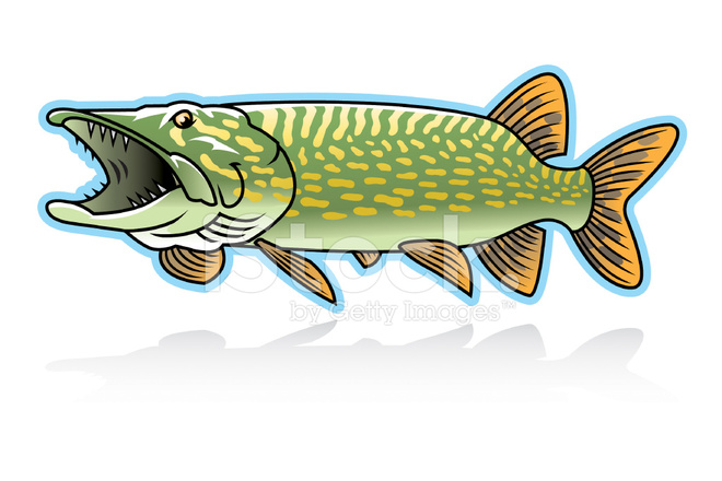 Northern Pike Stock Vector.