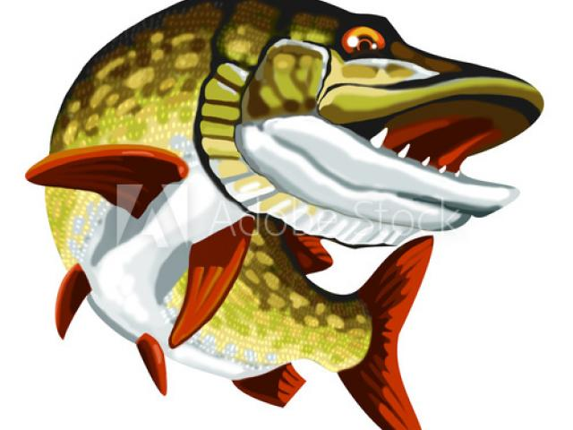 Free Northern Pike Clipart, Download Free Clip Art on Owips.com.
