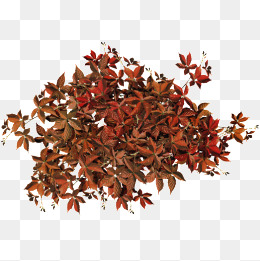 Fall Leaf Pile Png & Free Fall Leaf Pile.png Transparent.