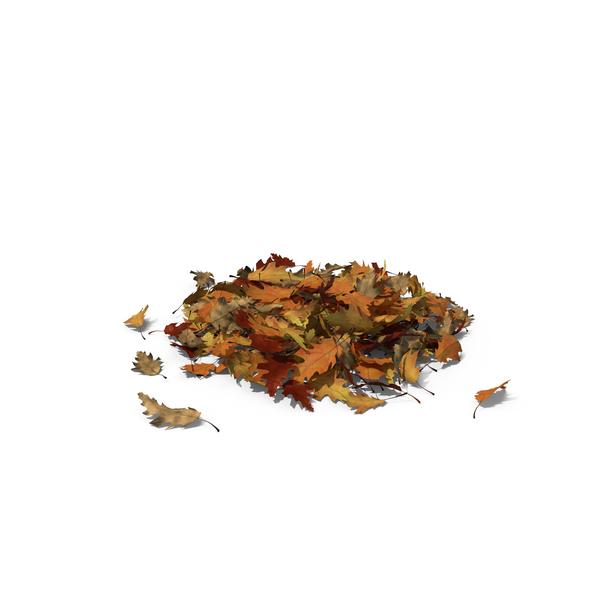Large Pile of Oak Leaves PNG Images & PSDs for Download.