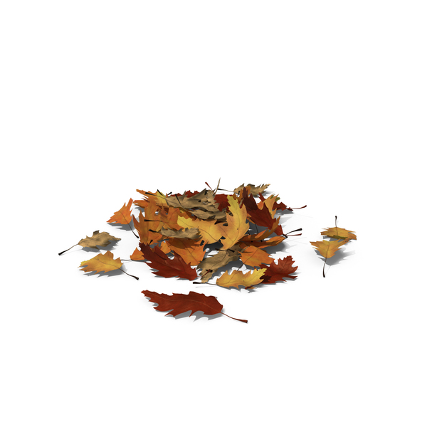 Small Pile of Oak Leaves PNG Images & PSDs for Download.