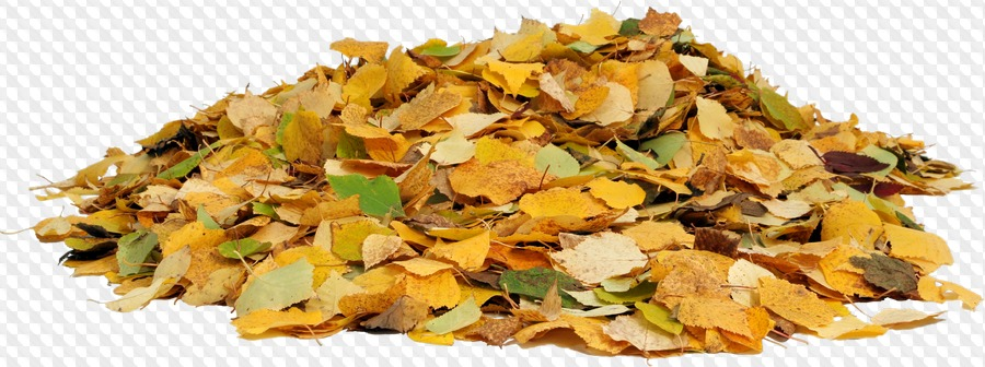 PSD, 10 PNG, Nature: Pile autumn leaves, Pile leaves currant.