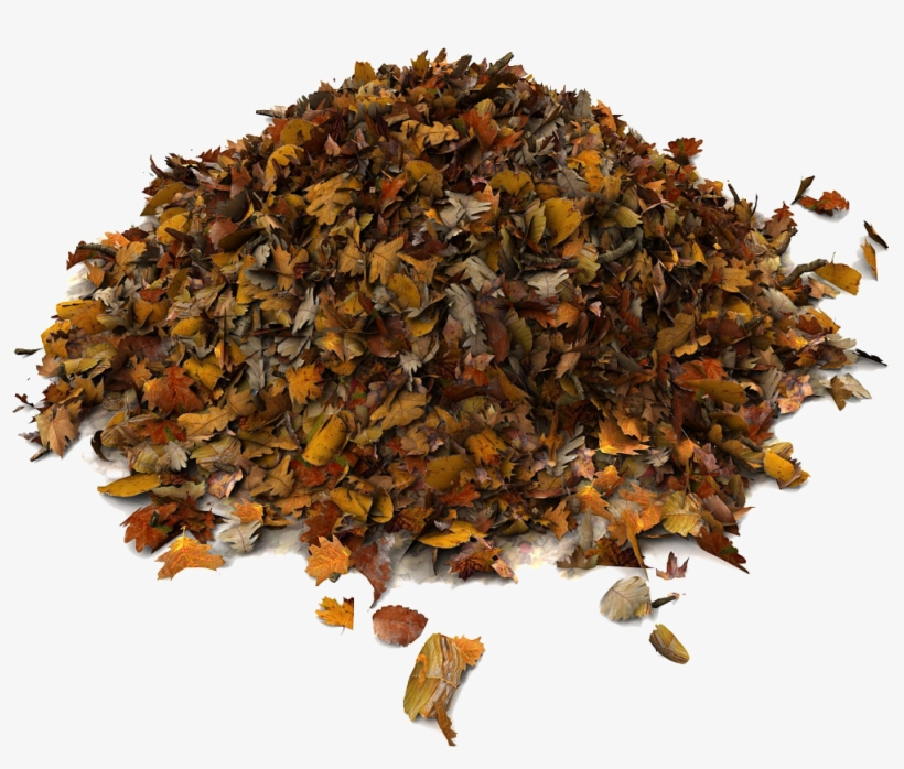 Download Pile Of Leaves Png () png images.