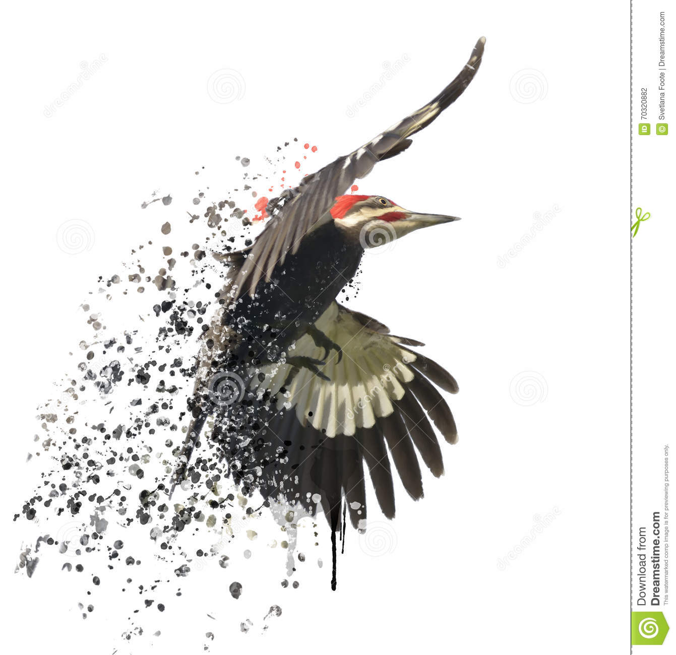 Clipart Pileated Woodpecker.