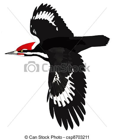 Woodpecker Stock Illustrations. 578 Woodpecker clip art images and.