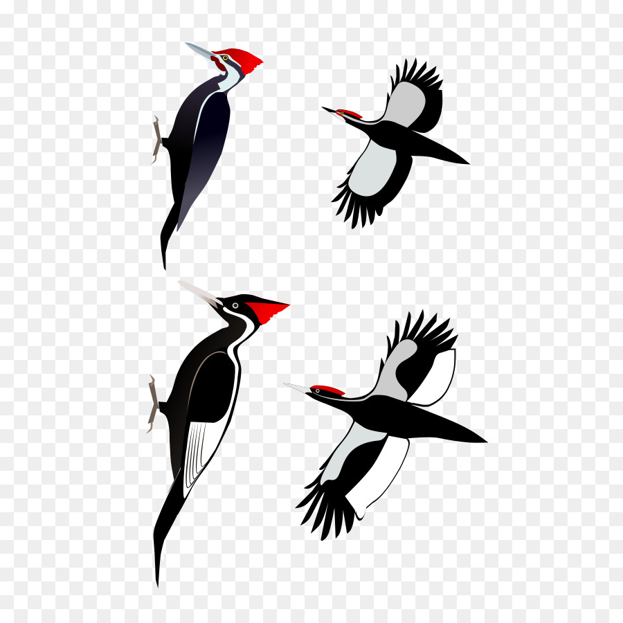 Bird Cartoon clipart.