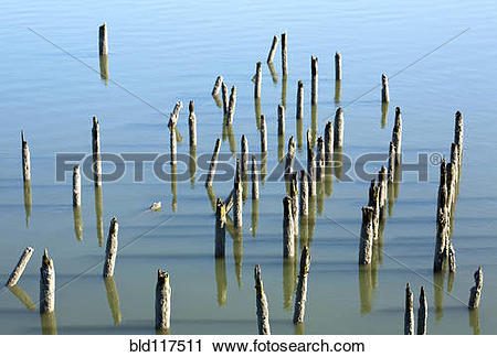 Stock Photography of Old Wood Pilings in Water, Oregon, USA.