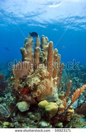 Pillar Coral Stock Photos, Royalty.