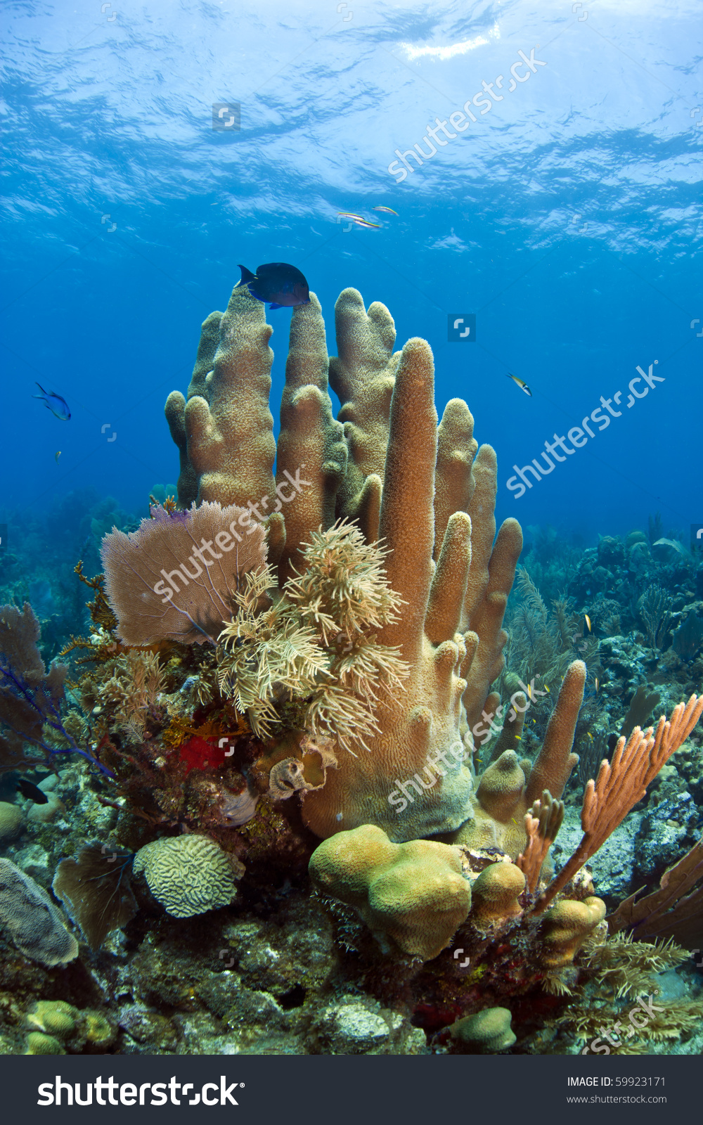 Underwater Coral Reef With Large Coral Head With Pillar Coral.