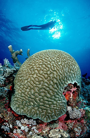 1000+ ideas about Hard Coral on Pinterest.