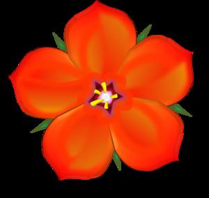 Scarlet Pimpernel.
