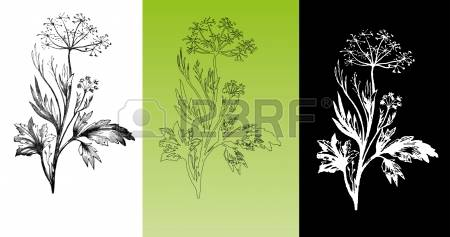 110 Botanical Plate Cliparts, Stock Vector And Royalty Free.