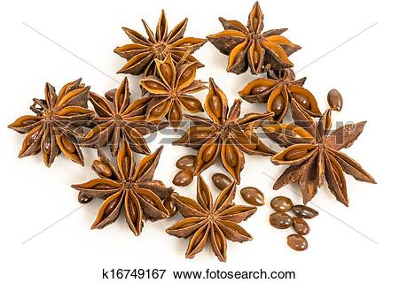 Picture of star anise. dried seeds of the plant Pimpinella anisum.
