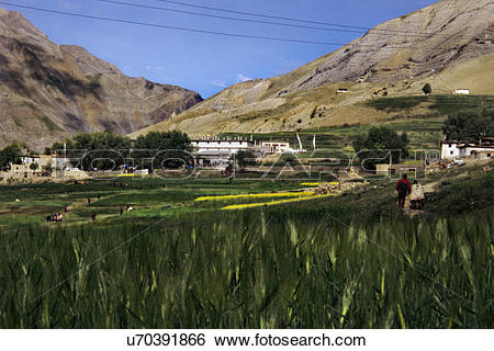 Stock Images of Kungri Gompa , Pin Valley u70391866.