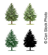 Pinaceae Illustrations and Clip Art. 32 Pinaceae royalty free.