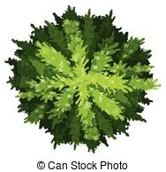 Pinaceae Clipart Vector and Illustration. 26 Pinaceae clip art.