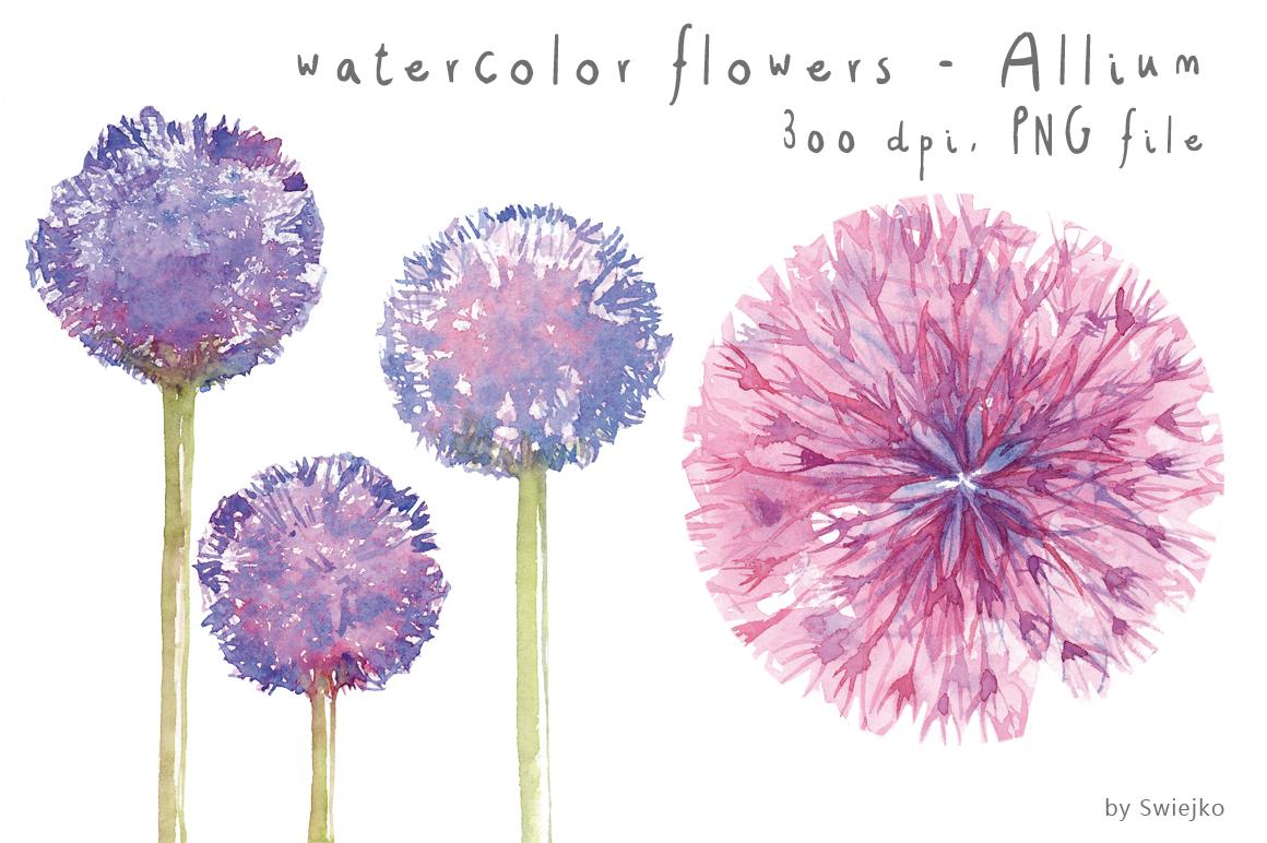 Watercolor Clipart, Watercolor Flowers, Flower Clipart, Allium.