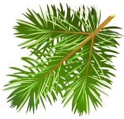 Watch more like Pine Branch Clip Art.