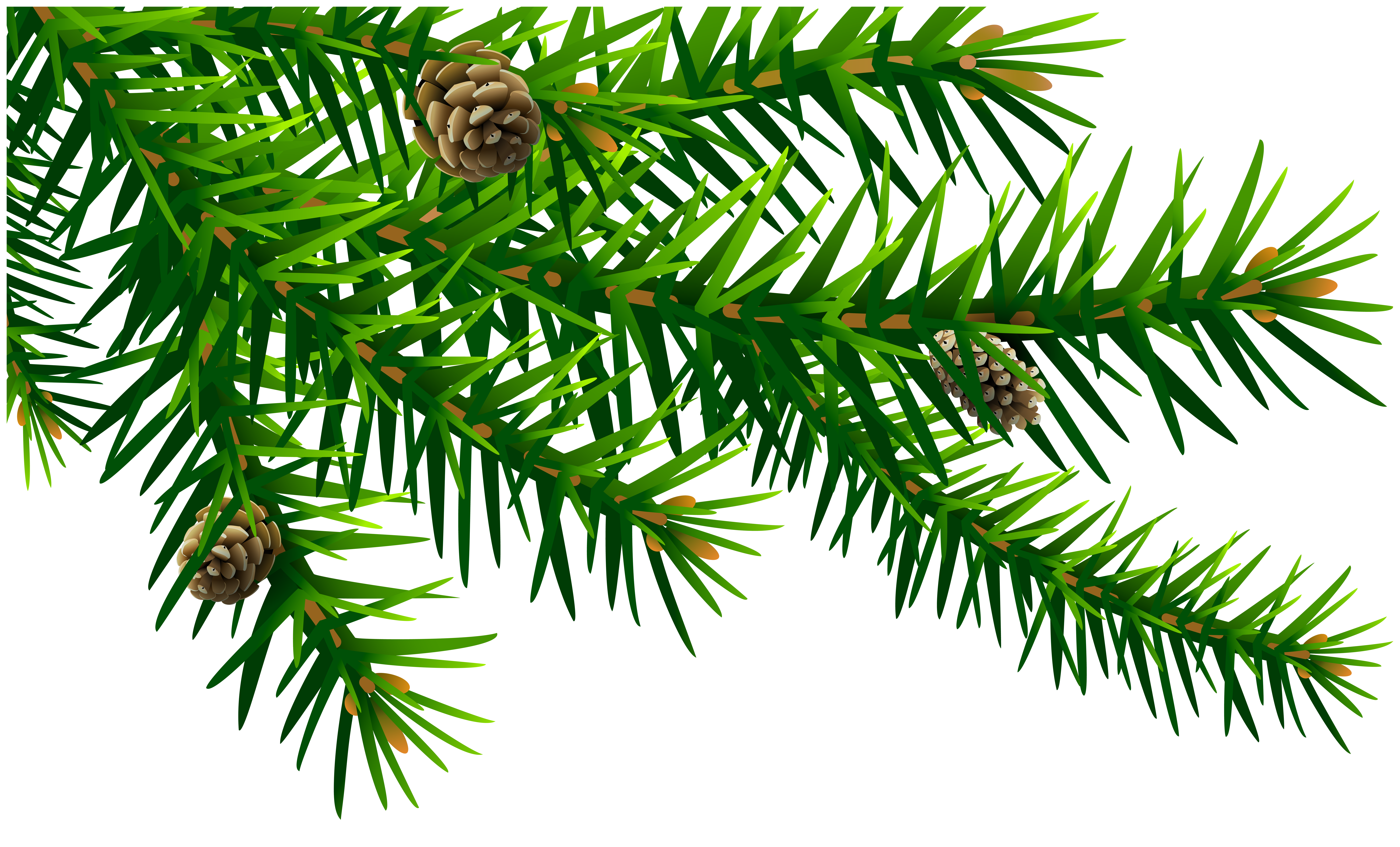 Green Pine Branch PNG Clip Art Image.