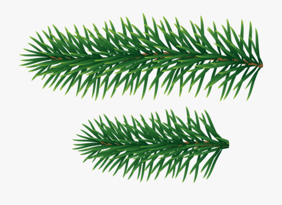 Pine Branches Png.