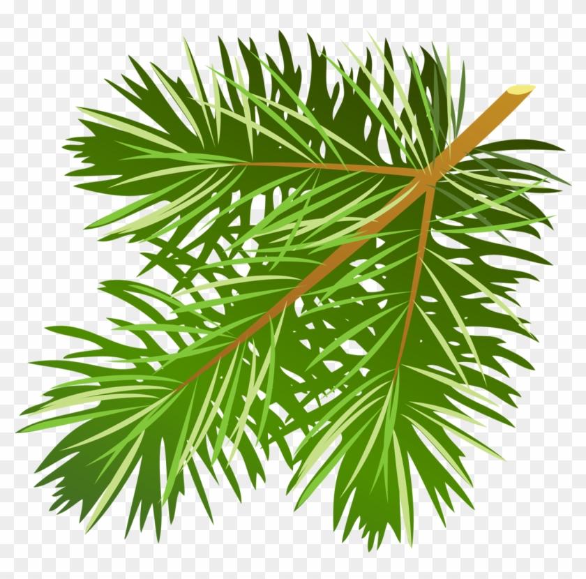 Transparent Pine Branch Png Clipart.