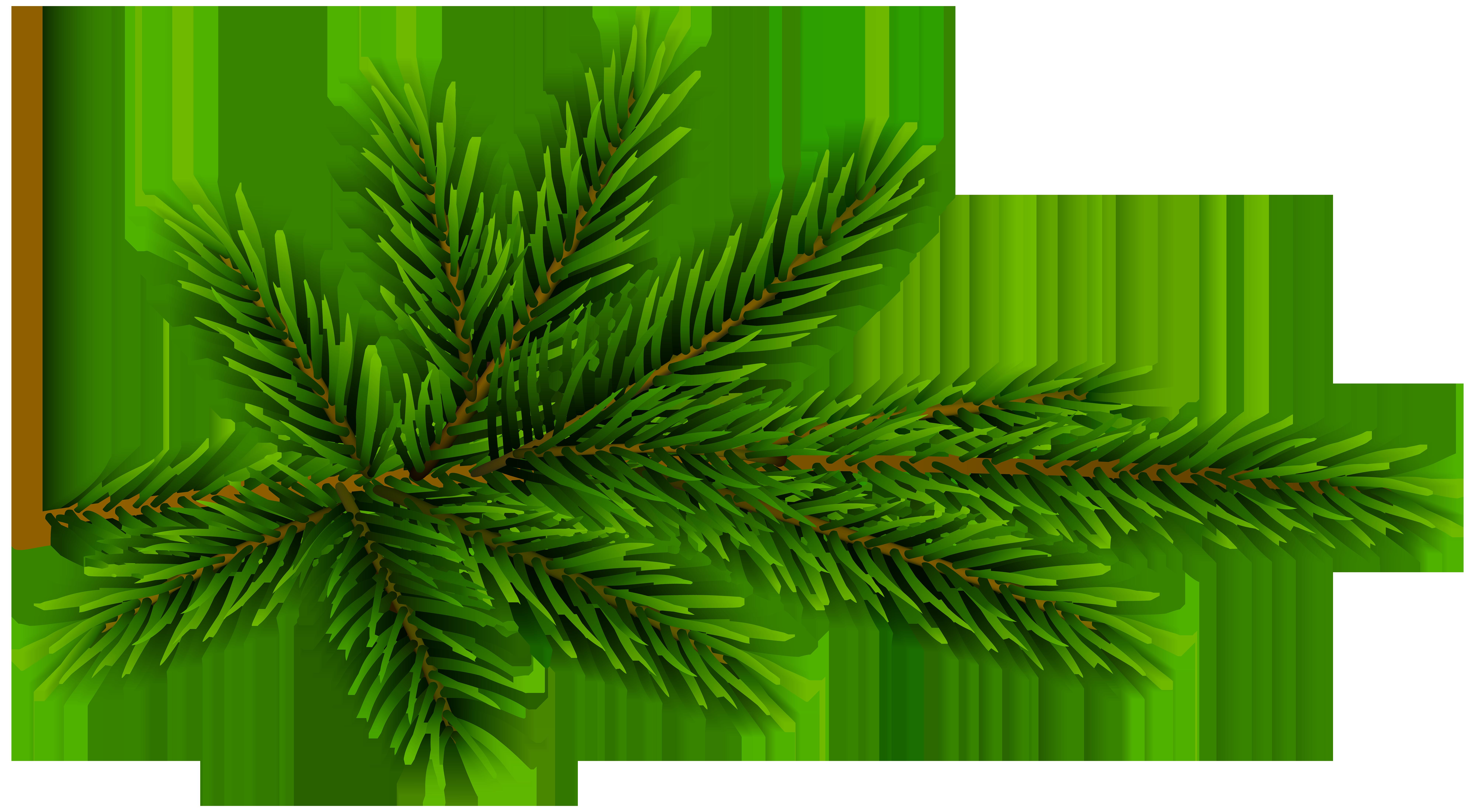 Pine Branch Transparent Clip Art.
