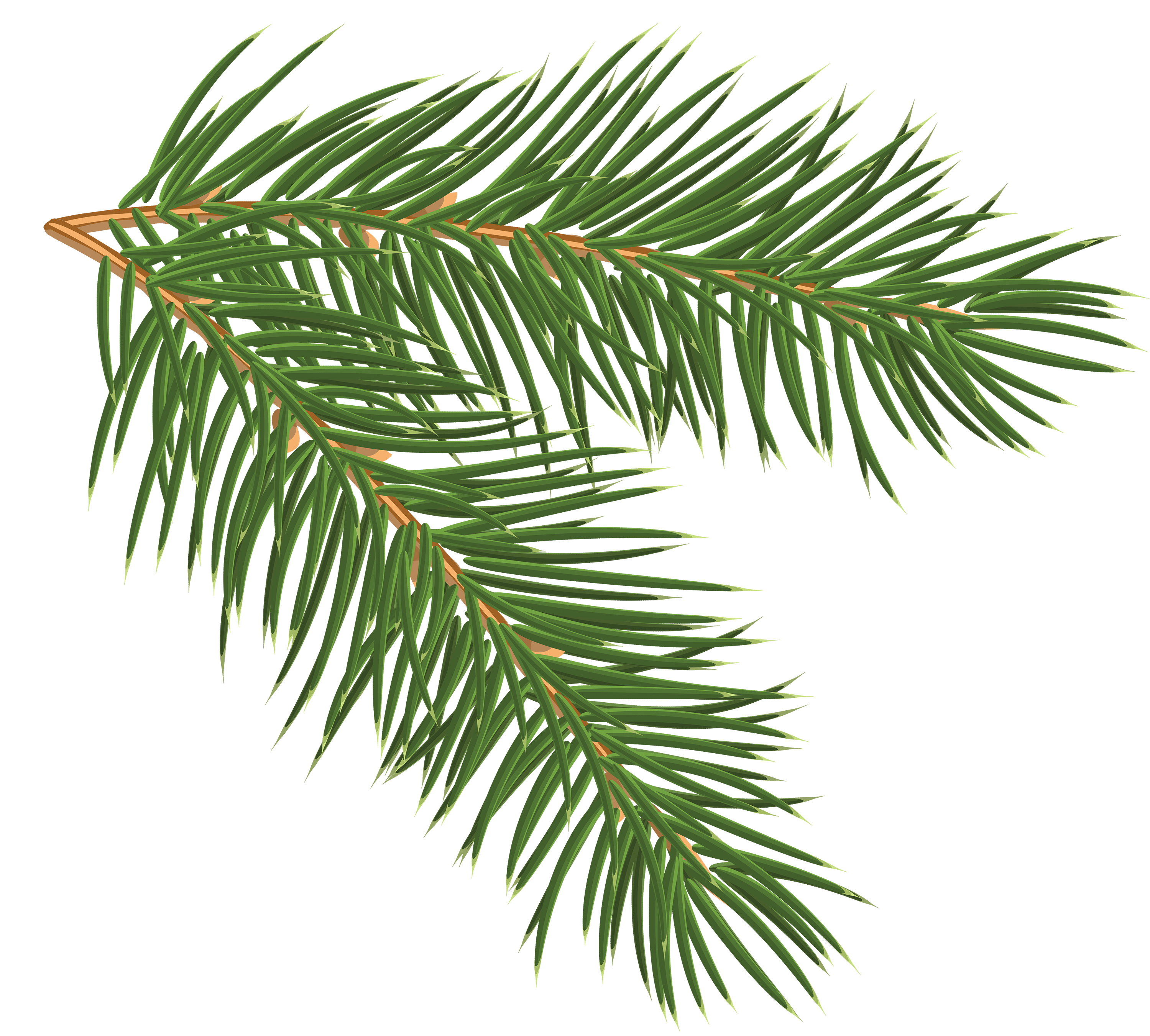 Pine branch clipart.