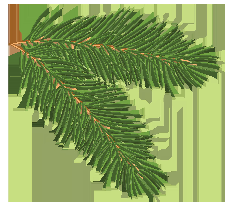 Pine branch clipart.