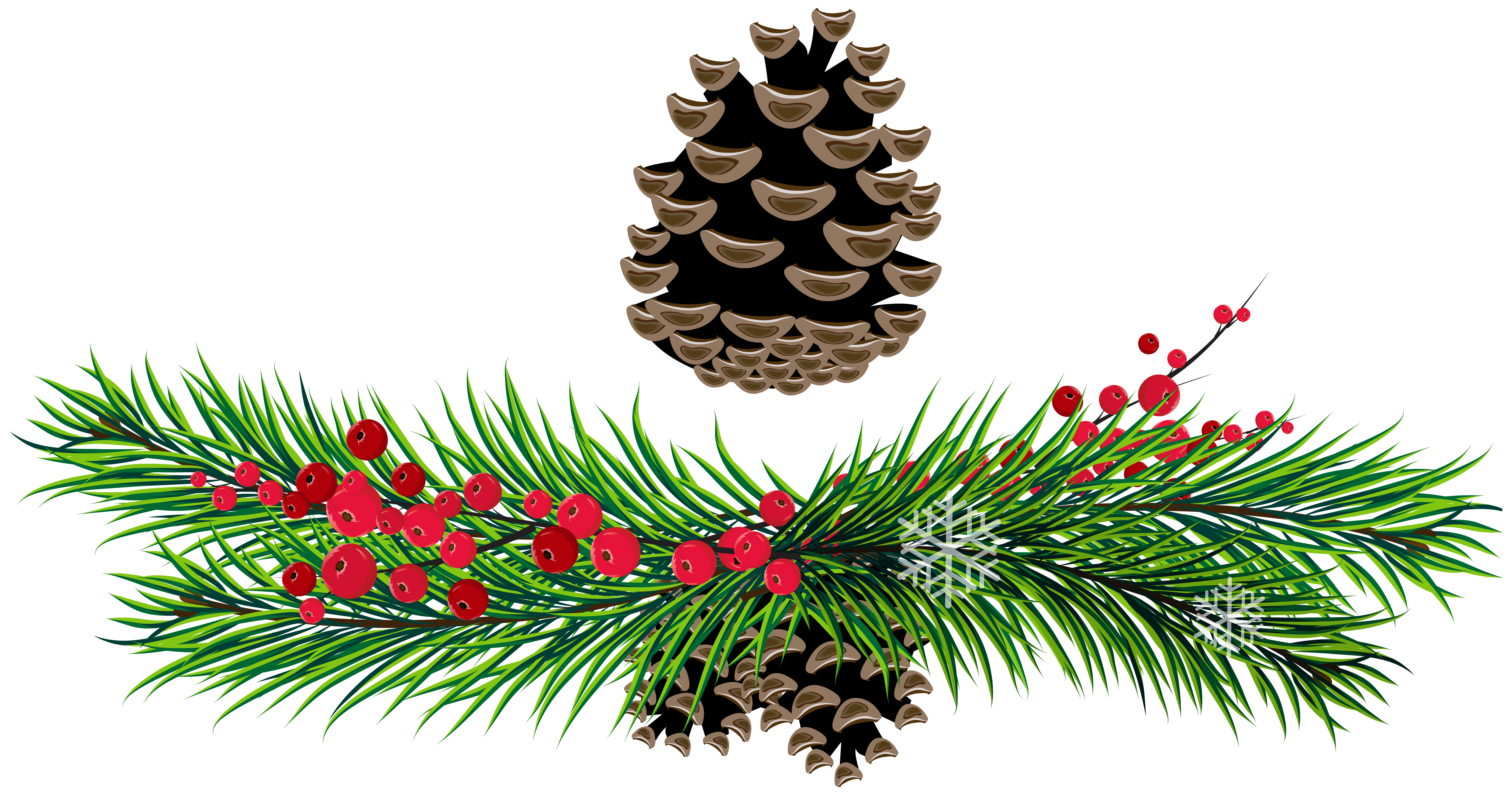 Pine Branches and Pine Cones PNG Picture.