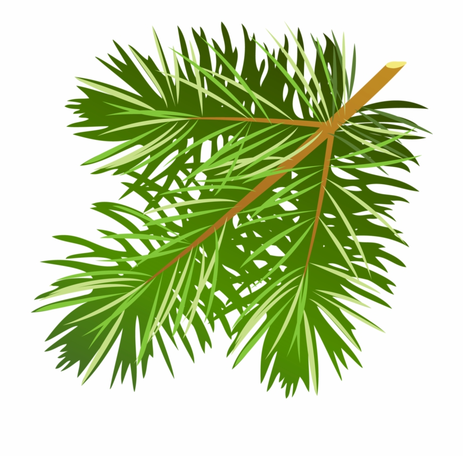 Pine Tree Branch Clipart.