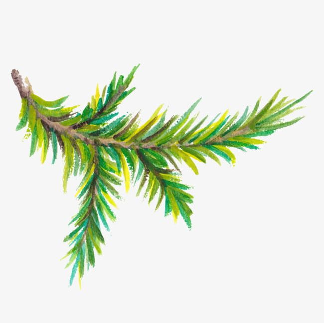 Watercolor Pine Trees Branch PNG, Clipart, Branch Clipart.