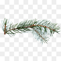 Pine Branch Png (99+ images in Collection) Page 1.