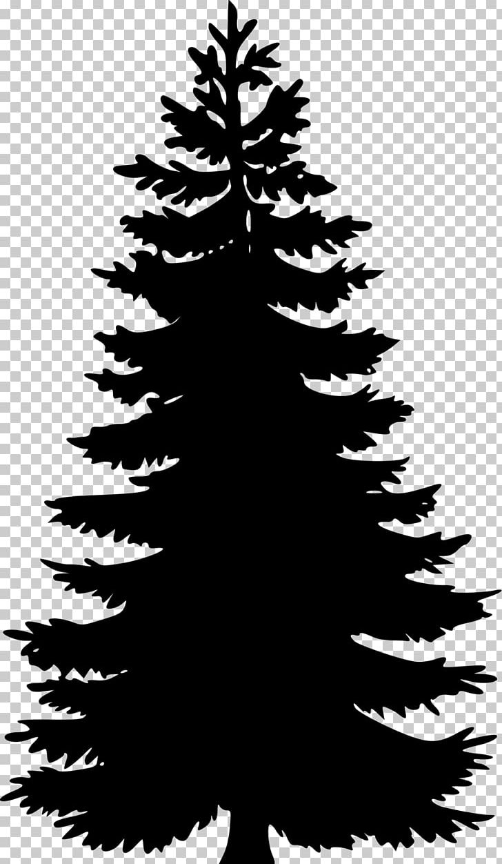 Eastern White Pine Tree PNG, Clipart, Black And White, Black.