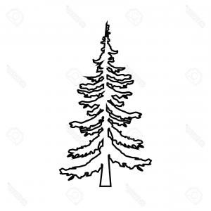 Evergreen Tree Clipart Black And White.