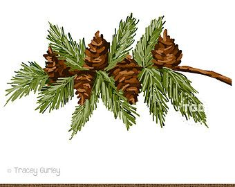 Pine Branch with Pine Cones.