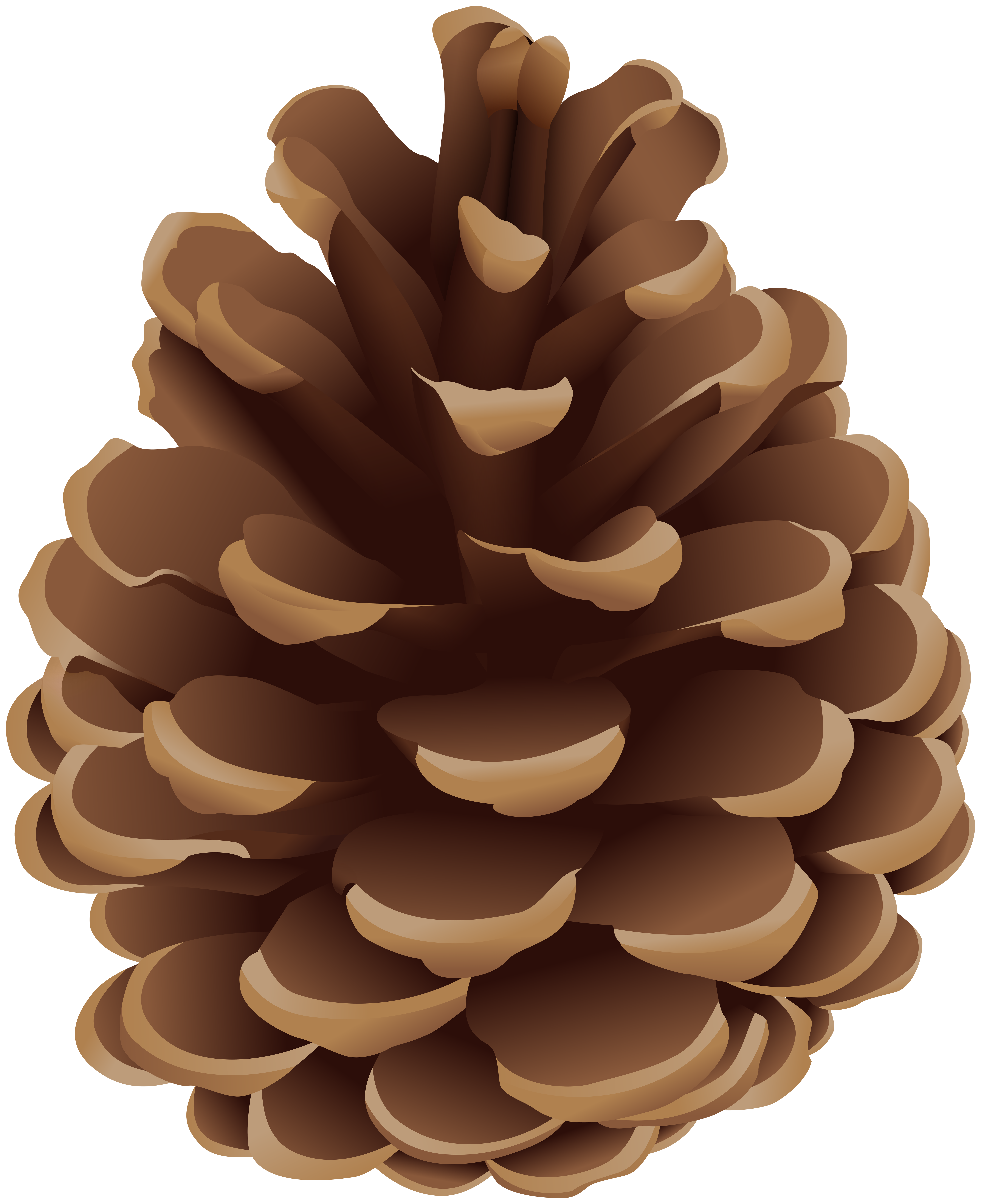 Pinecone PNG Clip Art.