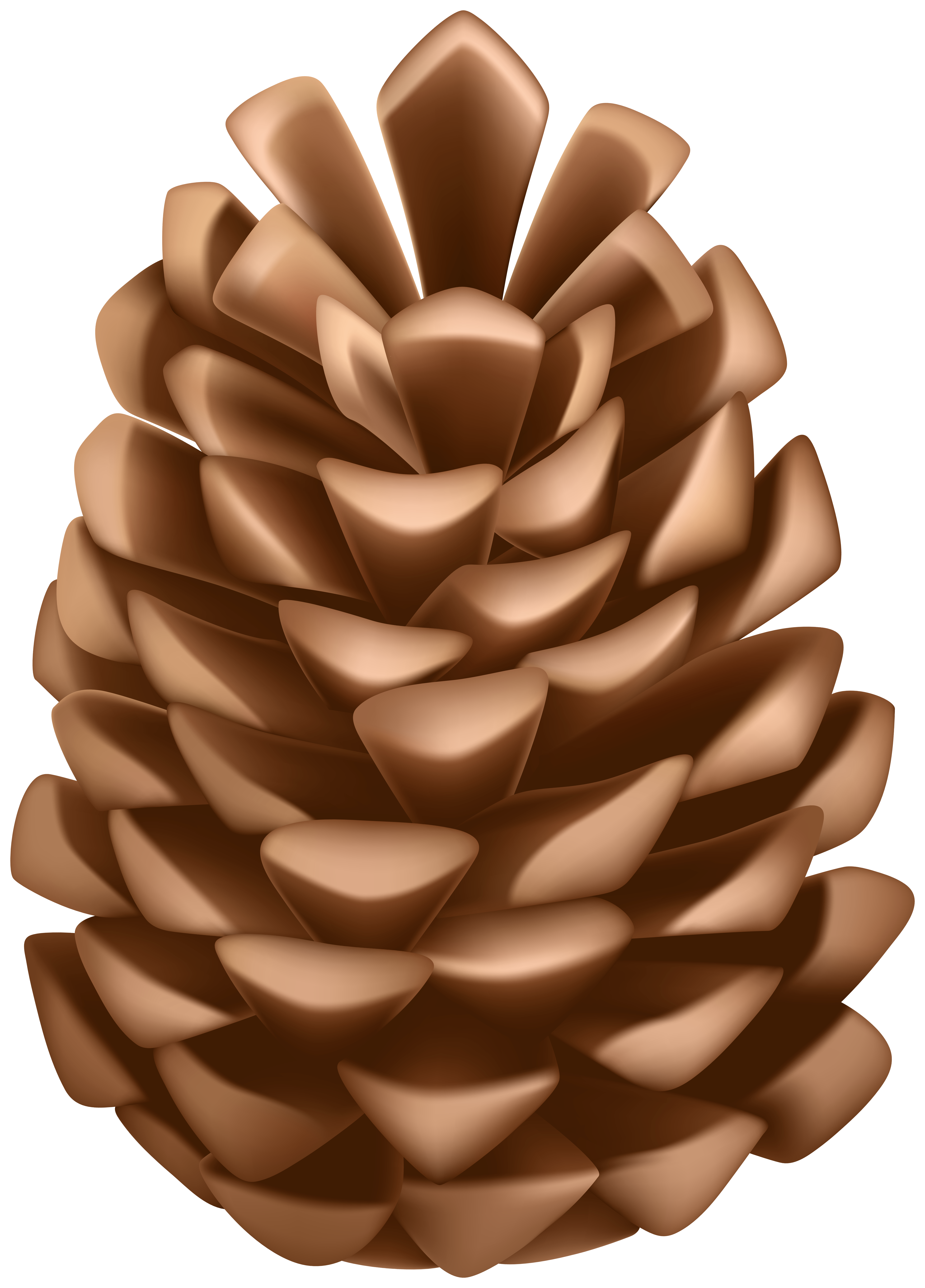 Pine Cone PNG Clip Art.