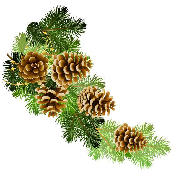 Pine and pine cones branch border clip art.