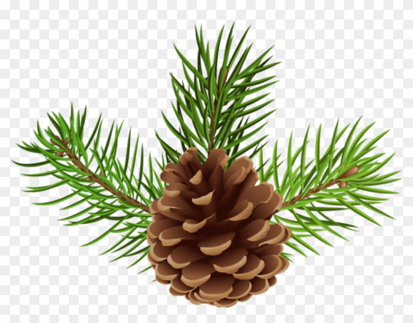 Free Png Pine Cone Png.
