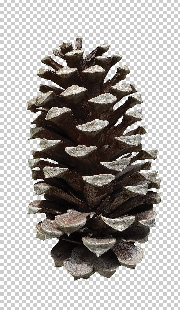 Pine Cone PNG, Clipart, Pine Cone Free PNG Download.