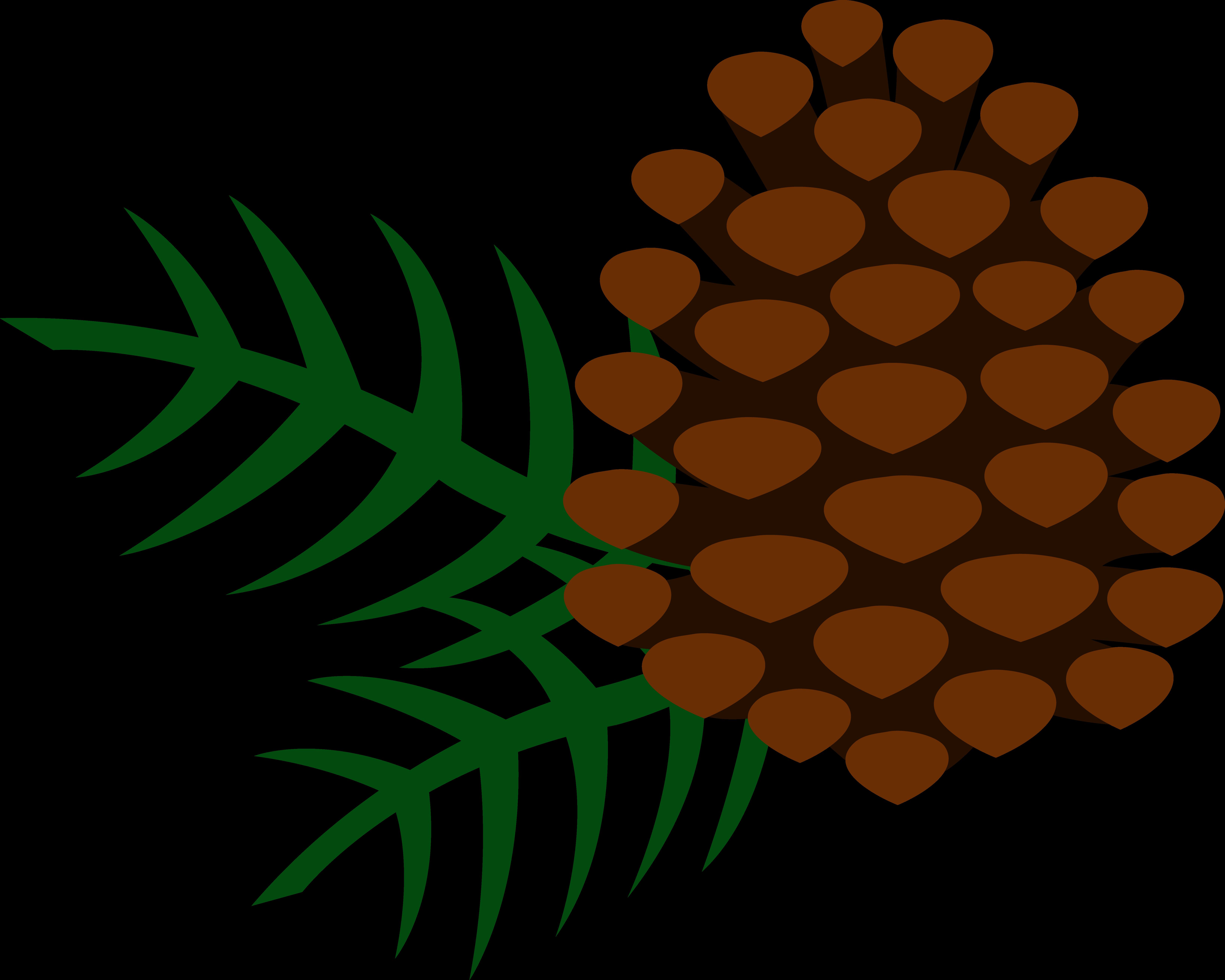 Conifer cone Clip art.