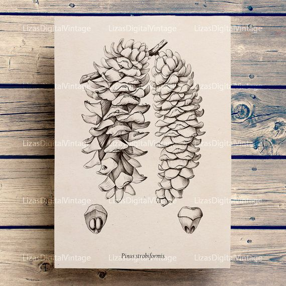 1000+ ideas about Pine Cone Art on Pinterest.
