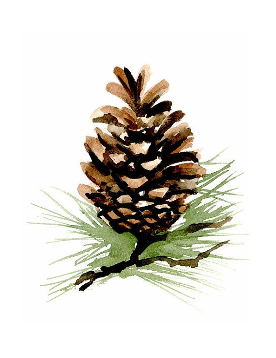 pine cones emerging clipart clipground