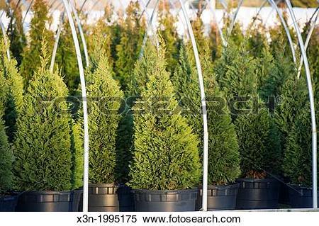 Stock Image of Commercial greenhouse nursery in Maryland. x3n.