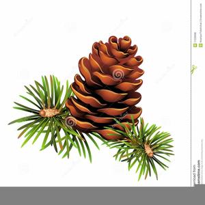 Pine Needles Clipart Graphics.