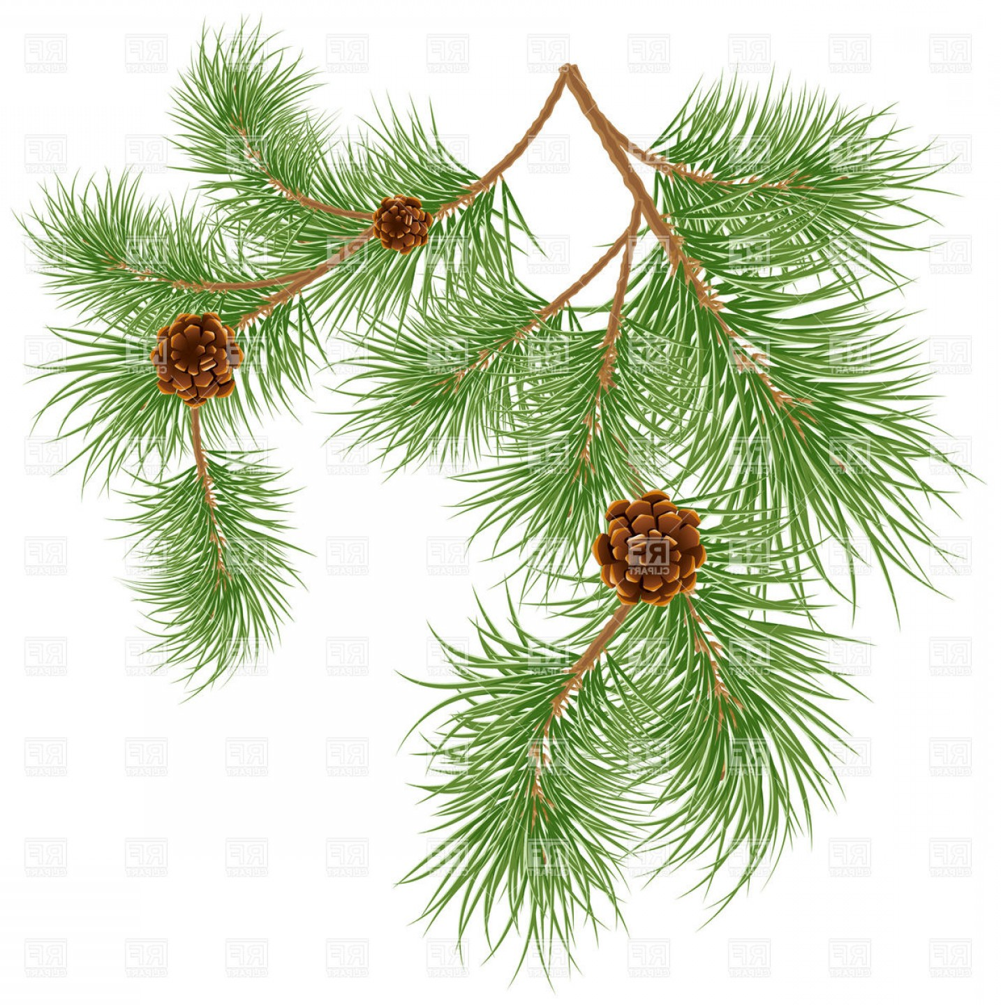 Pine Cones Strobiles And Pine Needles Vector Clipart.
