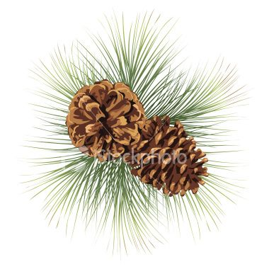 Two pine cones and pine needles. Pine Branches Twig with.