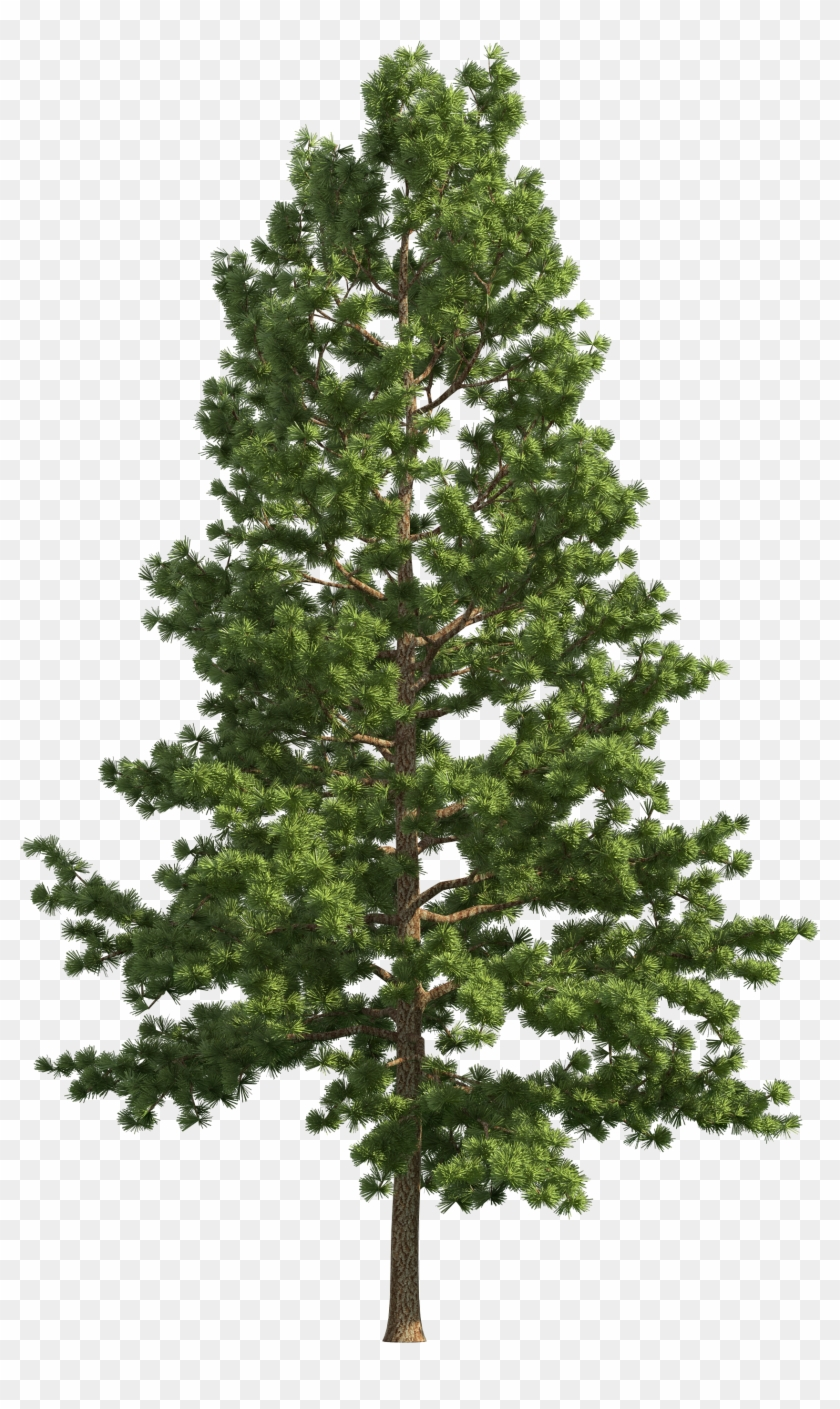 Pine Realistic Tree Png Clip Art.
